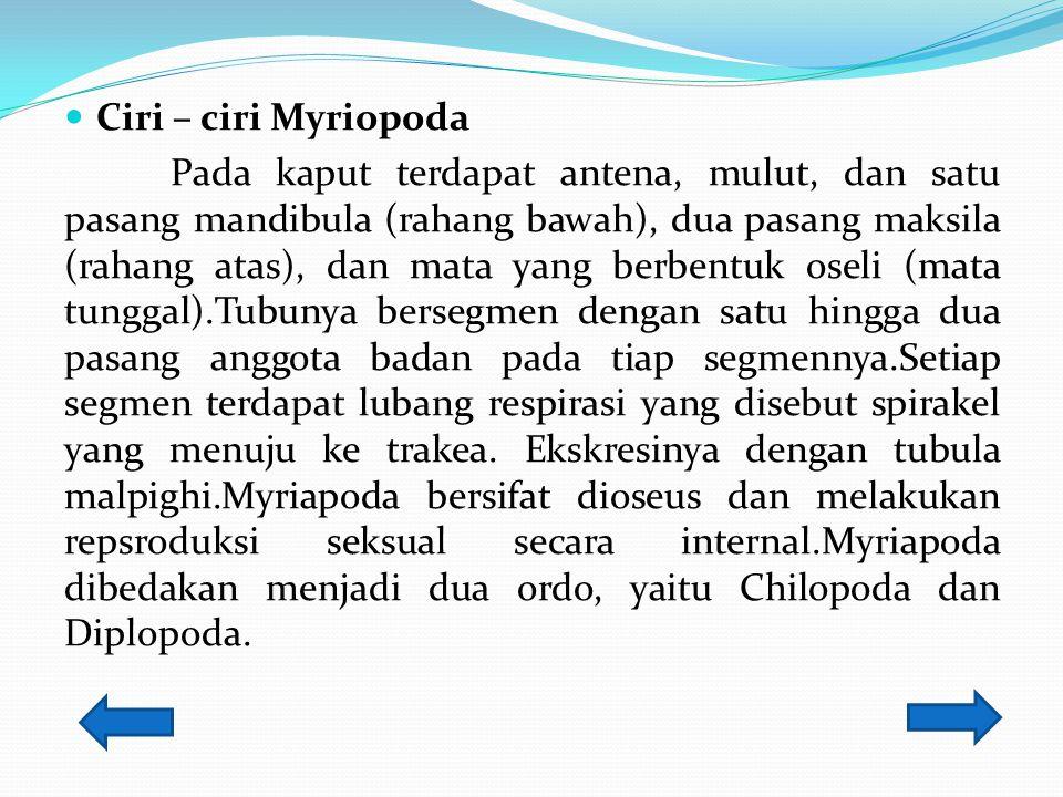 Ciri – ciri Myriopoda
