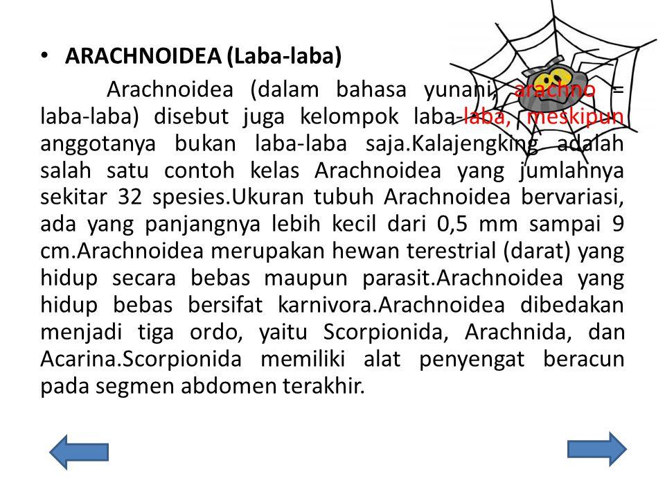ARACHNOIDEA (Laba-laba)