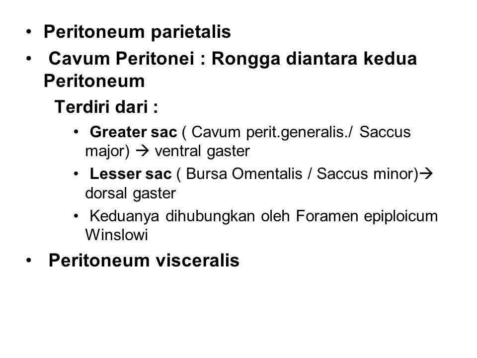 Peritoneum parietalis