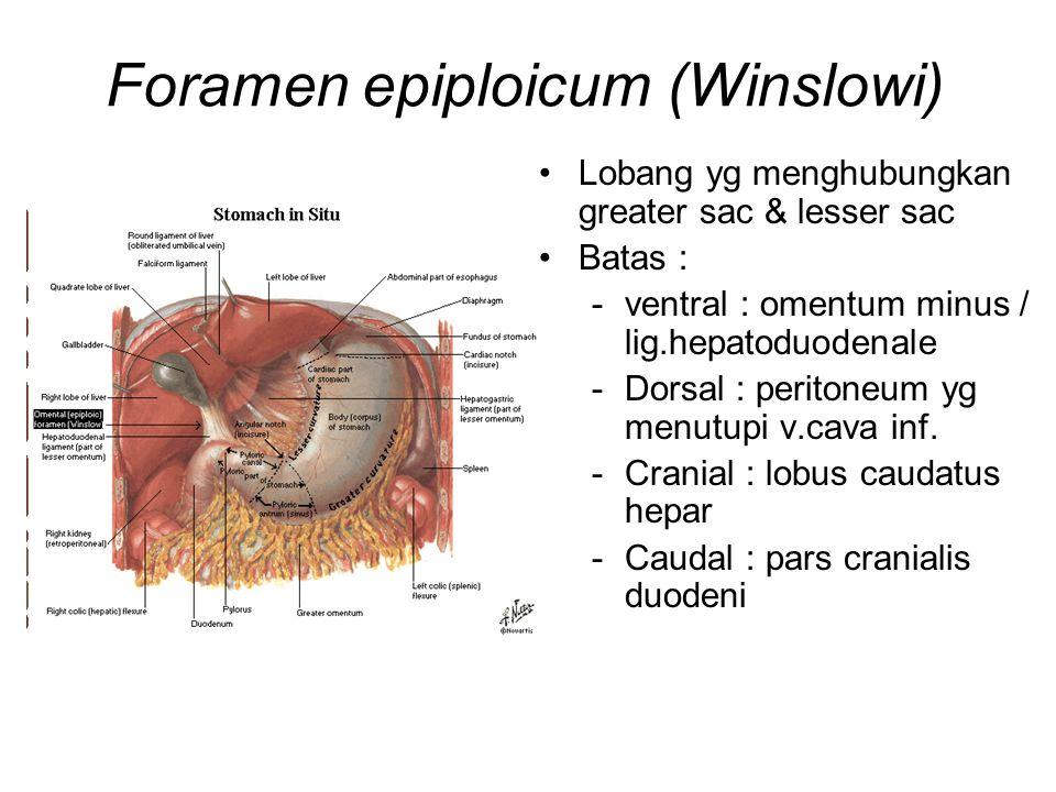 Foramen epiploicum (Winslowi)
