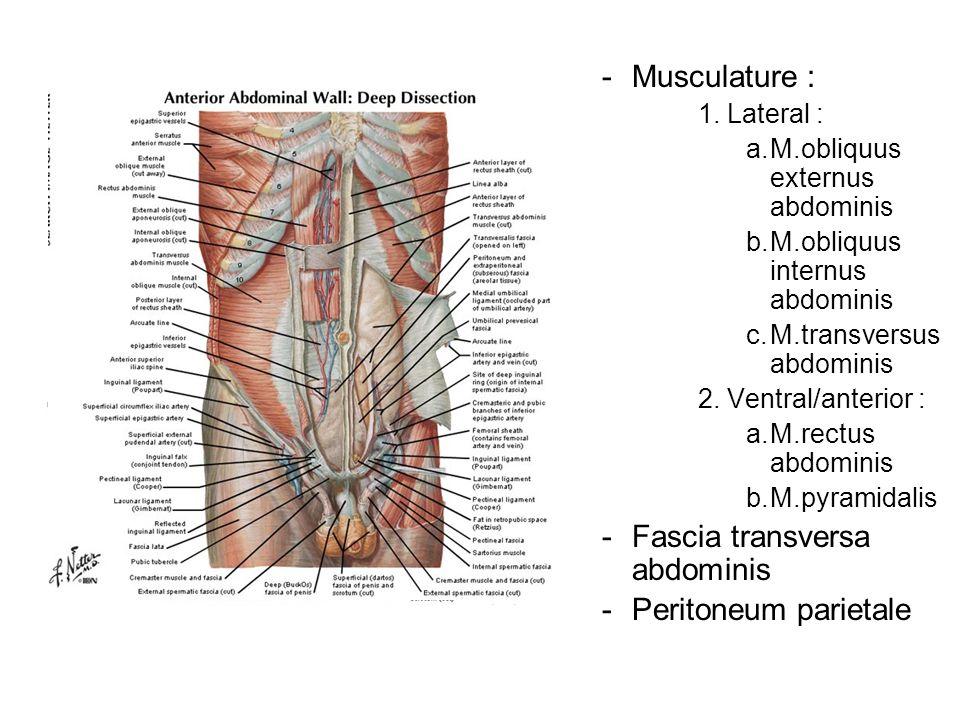 Fascia transversa abdominis Peritoneum parietale