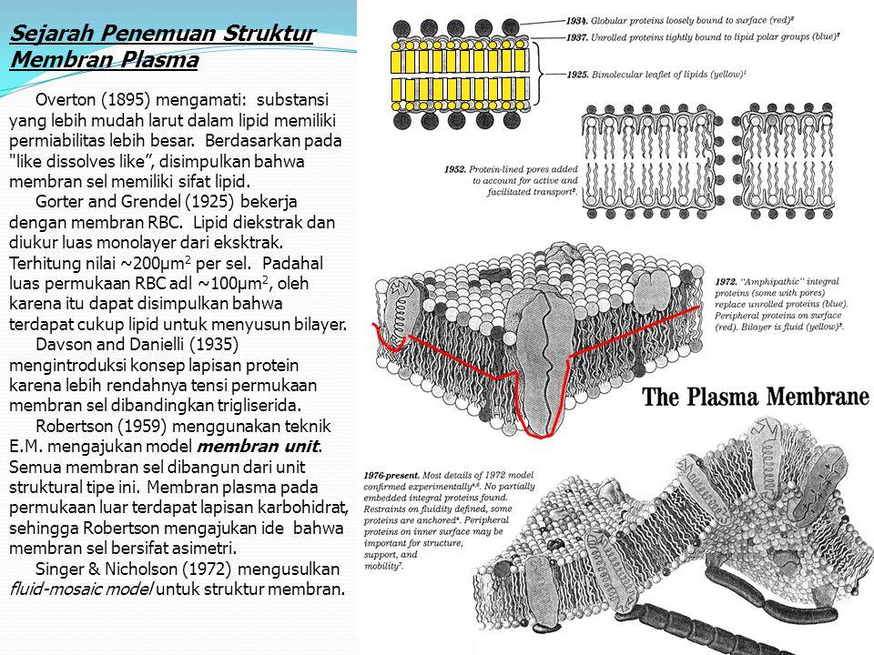 Sejarah Penemuan Struktur Membran Plasma