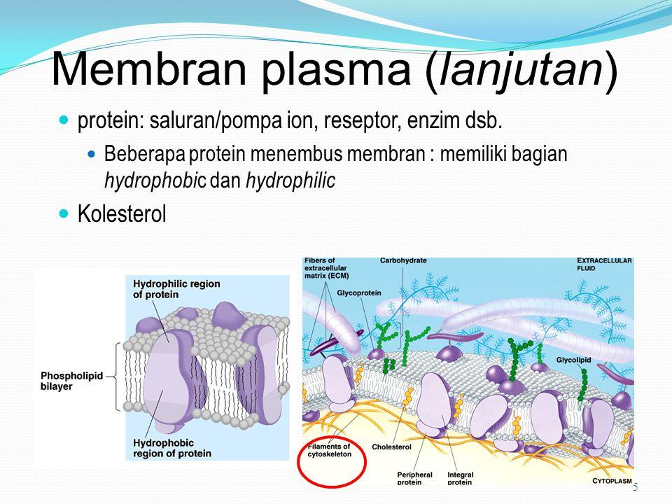 Membran plasma (lanjutan)