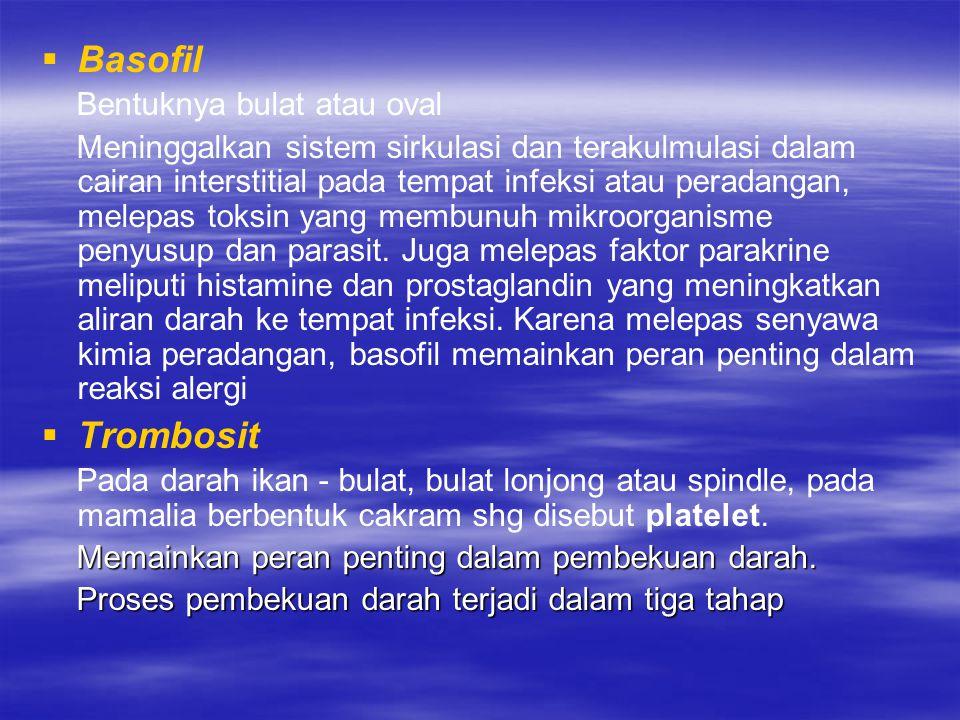 Basofil Trombosit Bentuknya bulat atau oval