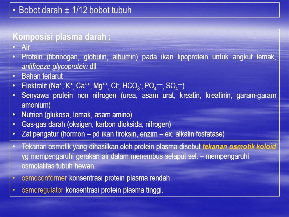 Bobot darah ± 1/12 bobot tubuh