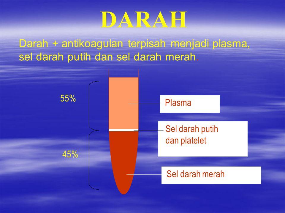 DARAH Darah + antikoagulan terpisah menjadi plasma, sel darah putih dan sel darah merah. Sel darah merah.