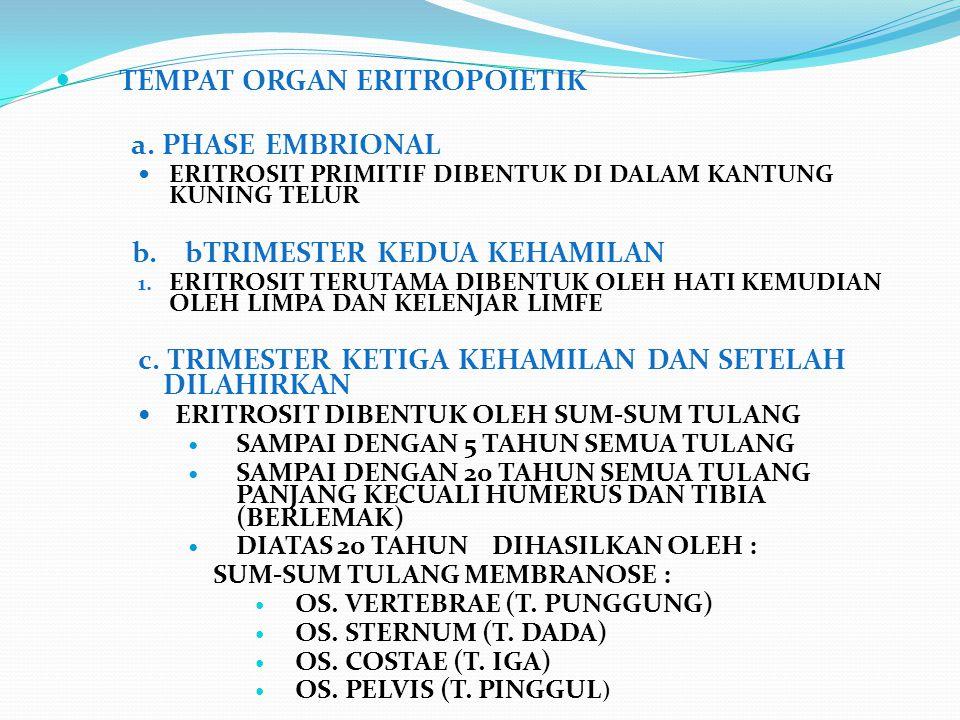 TEMPAT ORGAN ERITROPOIETIK a. PHASE EMBRIONAL