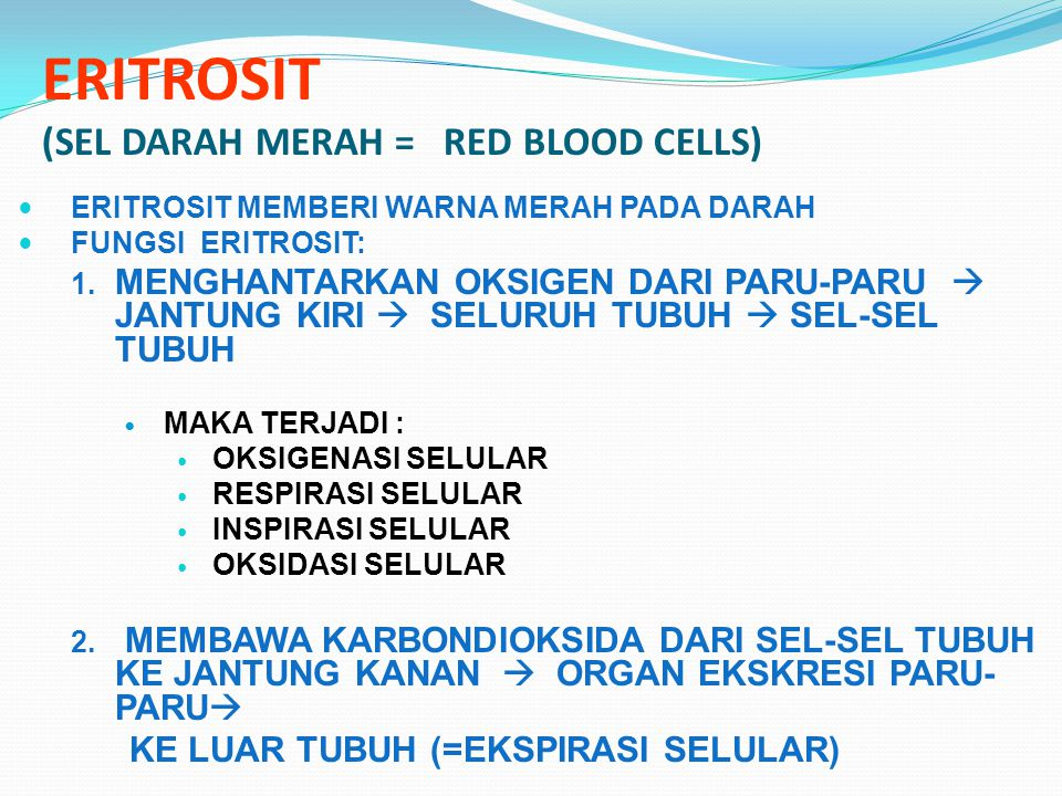 ERITROSIT (SEL DARAH MERAH = RED BLOOD CELLS)