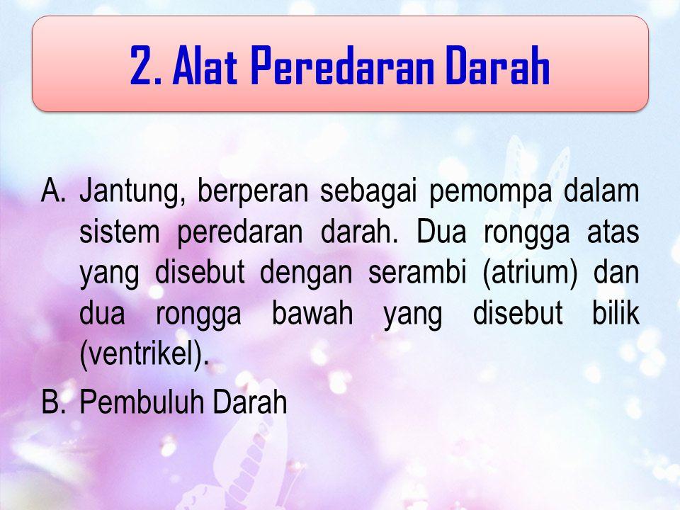 2. Alat Peredaran Darah