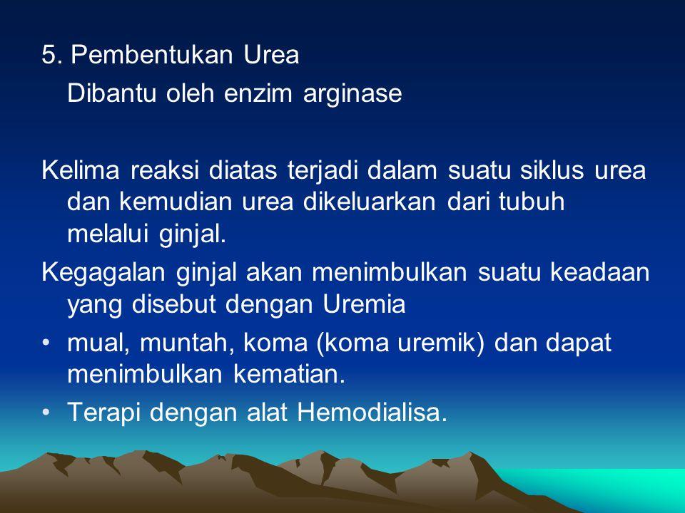5. Pembentukan Urea Dibantu oleh enzim arginase.