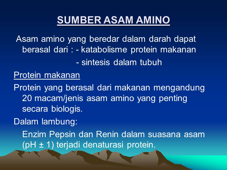SUMBER ASAM AMINO Asam amino yang beredar dalam darah dapat berasal dari : - katabolisme protein makanan.