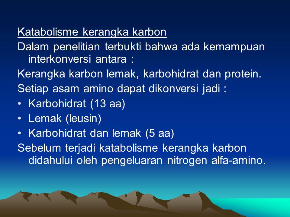 Katabolisme kerangka karbon