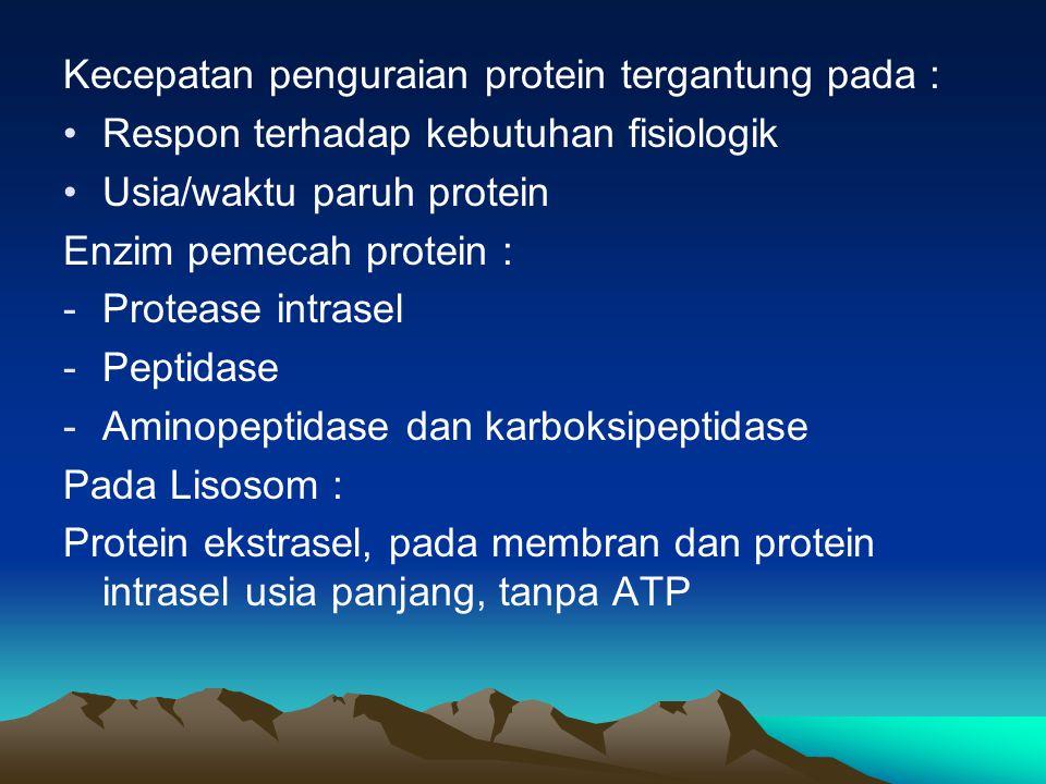 Kecepatan penguraian protein tergantung pada :