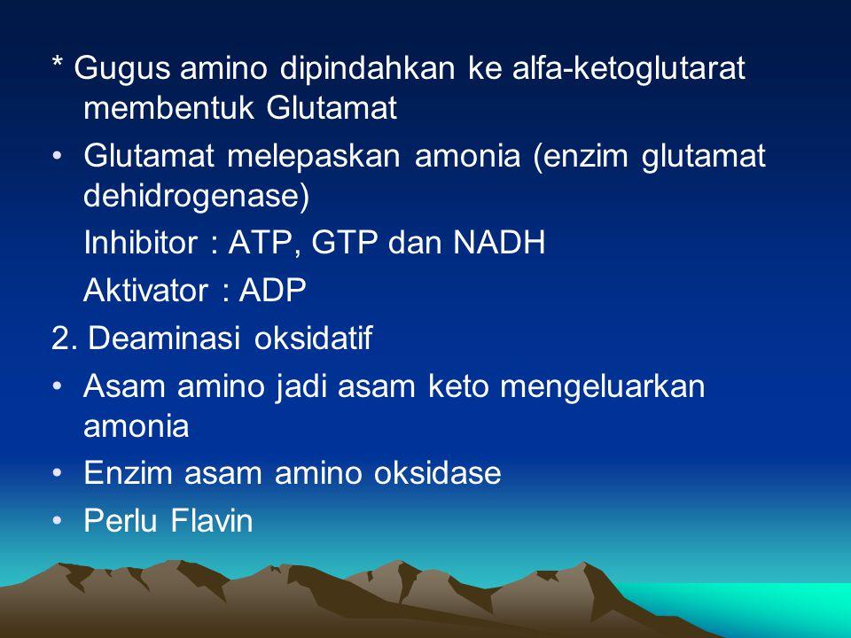 * Gugus amino dipindahkan ke alfa-ketoglutarat membentuk Glutamat