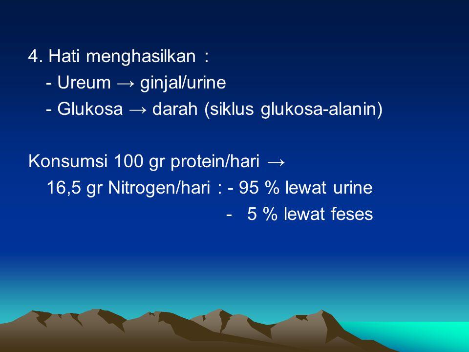 4. Hati menghasilkan : - Ureum → ginjal/urine. - Glukosa → darah (siklus glukosa-alanin) Konsumsi 100 gr protein/hari →