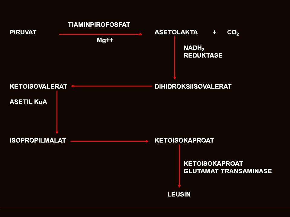 TIAMINPIROFOSFAT PIRUVAT ASETOLAKTA + CO2. Mg++ NADH2. REDUKTASE. KETOISOVALERAT DIHIDROKSIISOVALERAT.