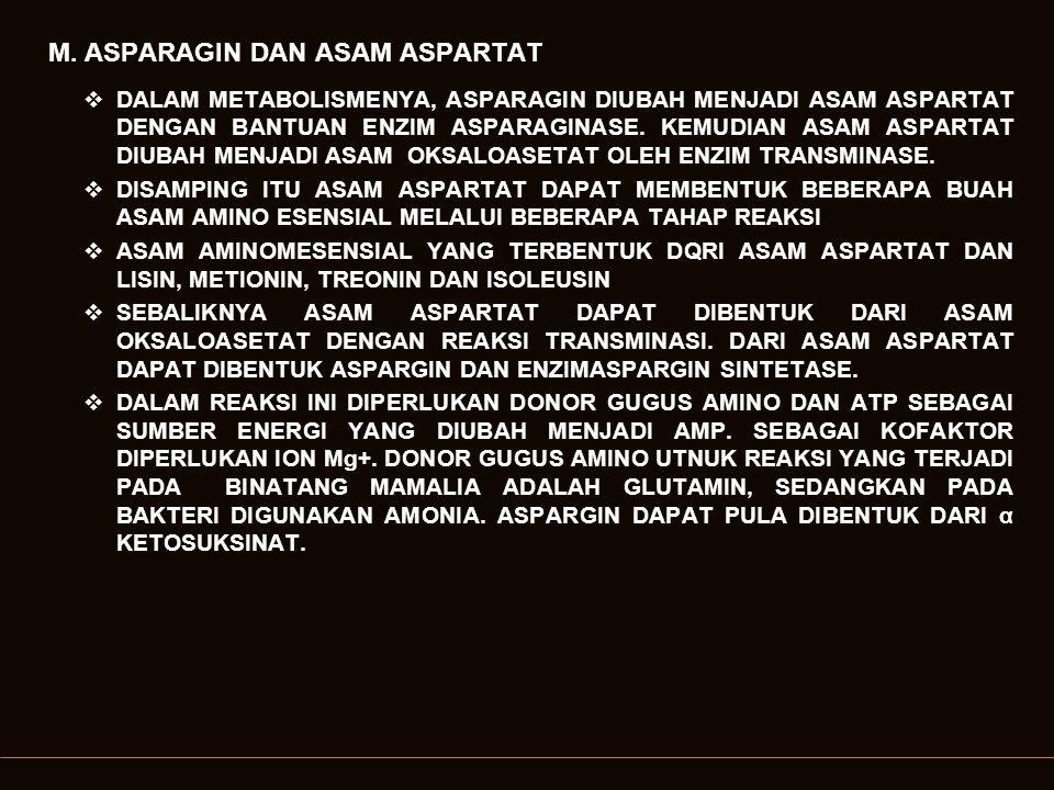 M. ASPARAGIN DAN ASAM ASPARTAT