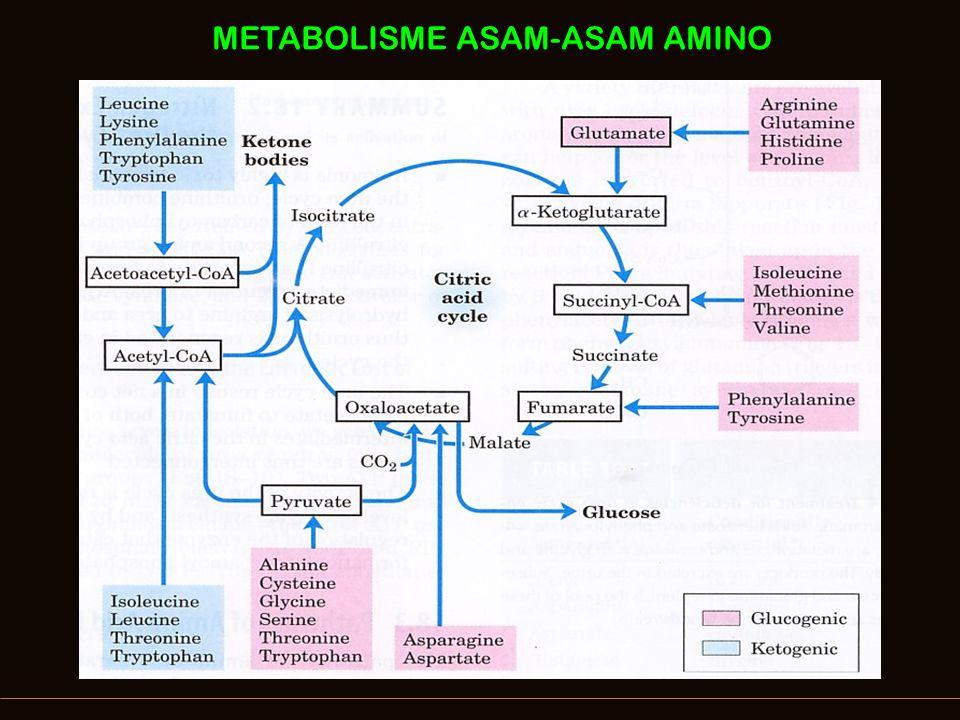METABOLISME ASAM-ASAM AMINO