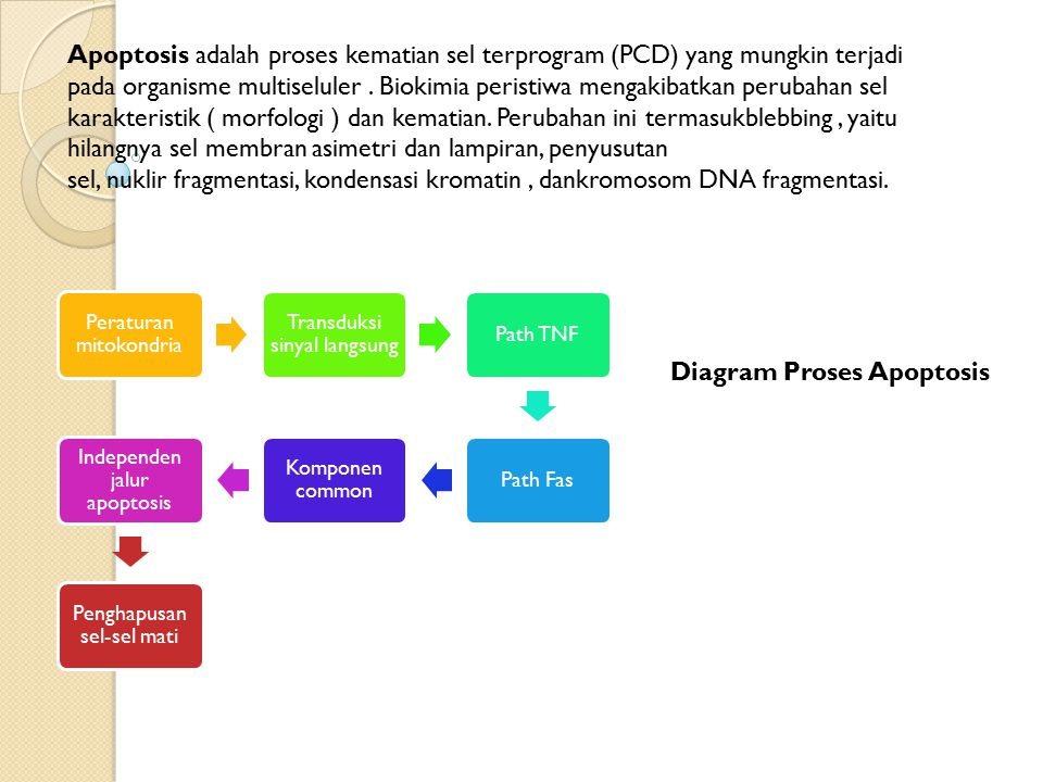 Diagram Proses Apoptosis