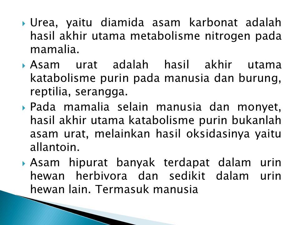 Urea, yaitu diamida asam karbonat adalah hasil akhir utama metabolisme nitrogen pada mamalia.