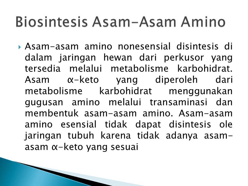 Biosintesis Asam-Asam Amino