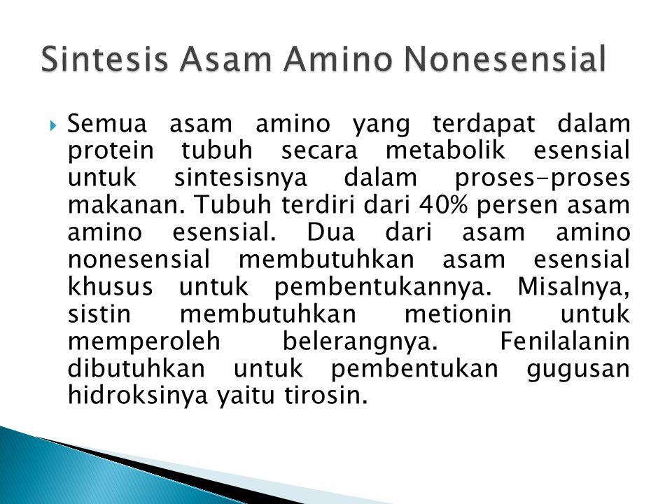 Sintesis Asam Amino Nonesensial