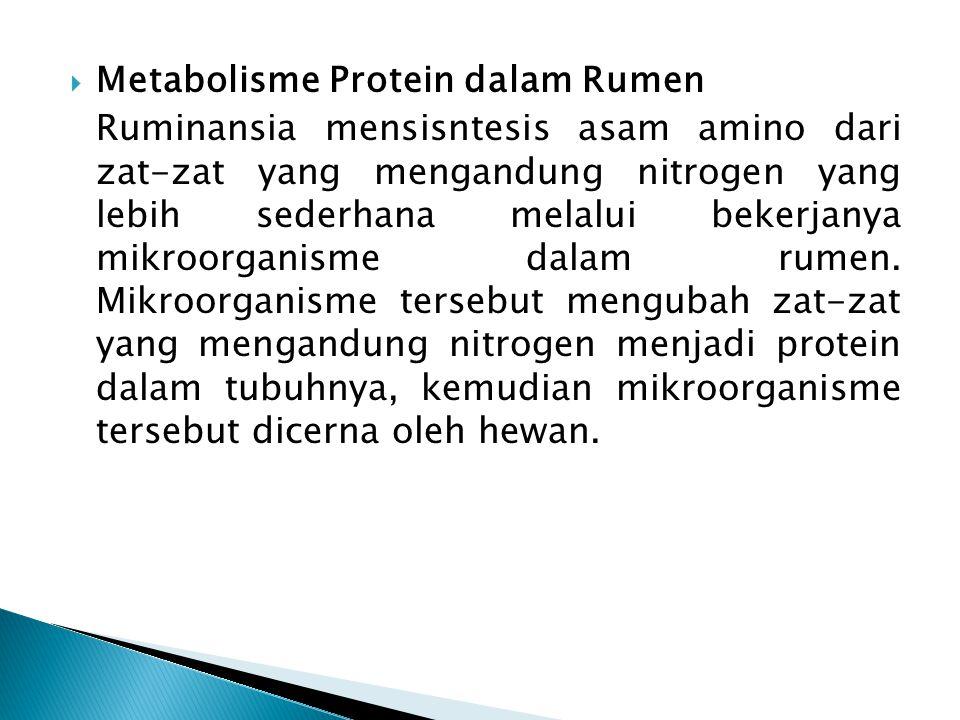 Metabolisme Protein dalam Rumen