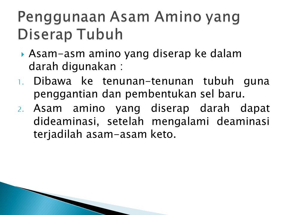 Penggunaan Asam Amino yang Diserap Tubuh