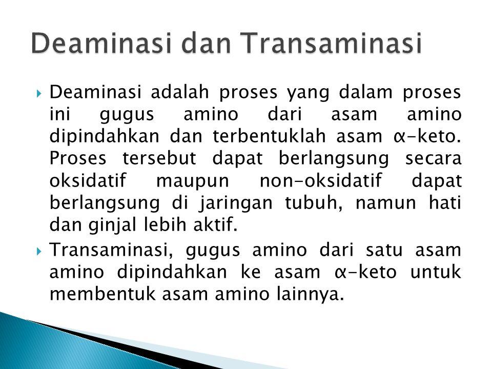 Deaminasi dan Transaminasi