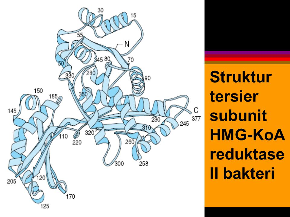 Struktur tersier subunit HMG-KoA reduktase II bakteri