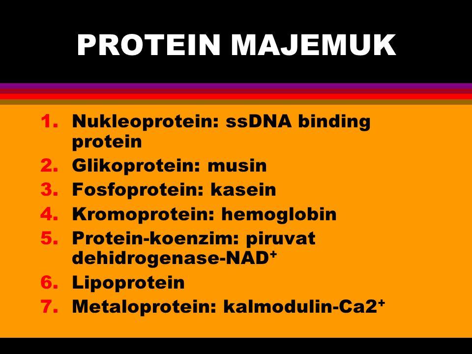 PROTEIN MAJEMUK Nukleoprotein: ssDNA binding protein