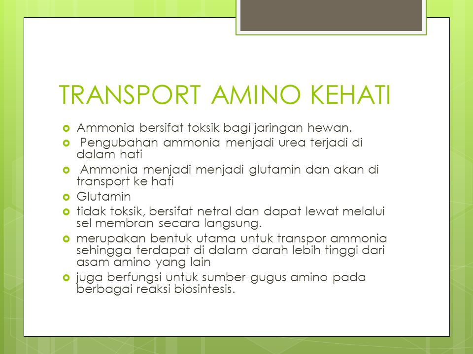 TRANSPORT AMINO KEHATI