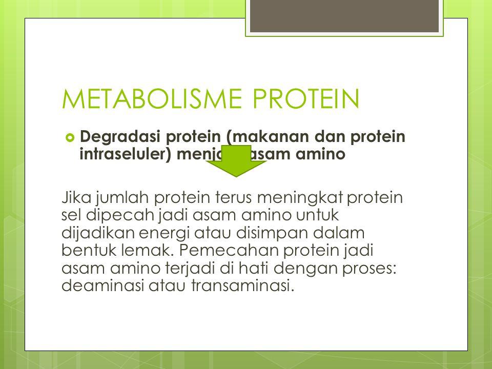 METABOLISME PROTEIN Degradasi protein (makanan dan protein intraseluler) menjadi asam amino.