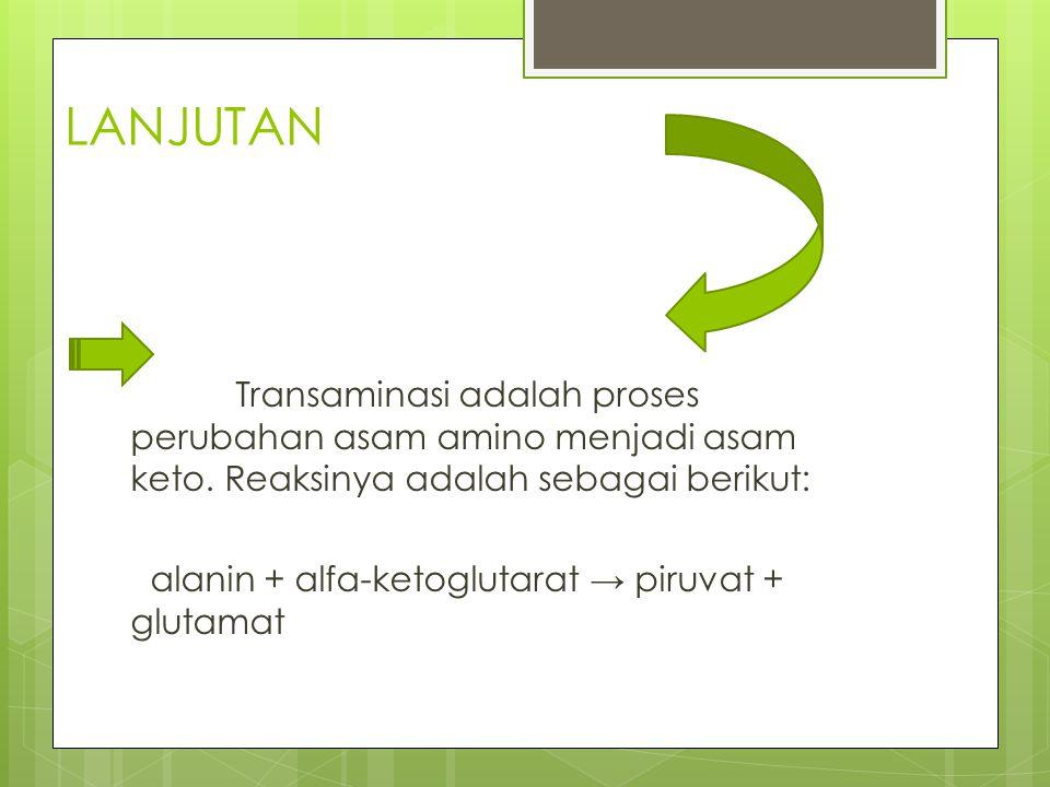 LANJUTAN Transaminasi adalah proses perubahan asam amino menjadi asam keto. Reaksinya adalah sebagai berikut: