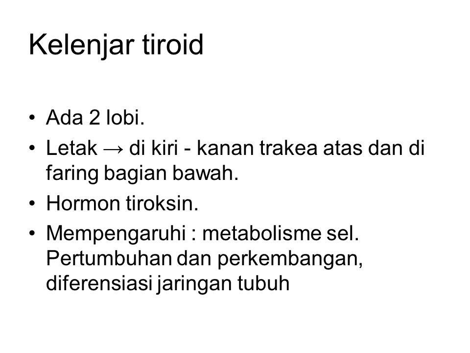 Kelenjar tiroid Ada 2 lobi.