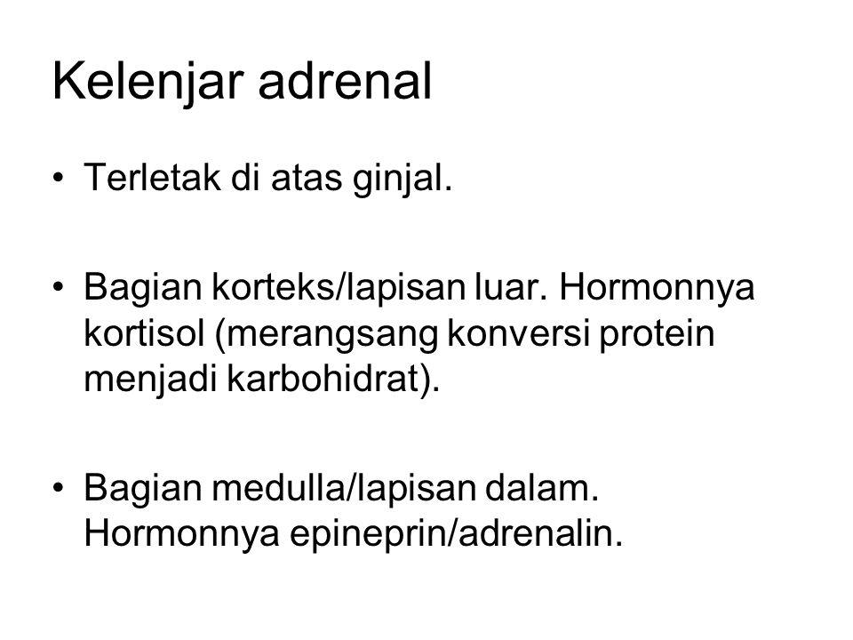 Kelenjar adrenal Terletak di atas ginjal.