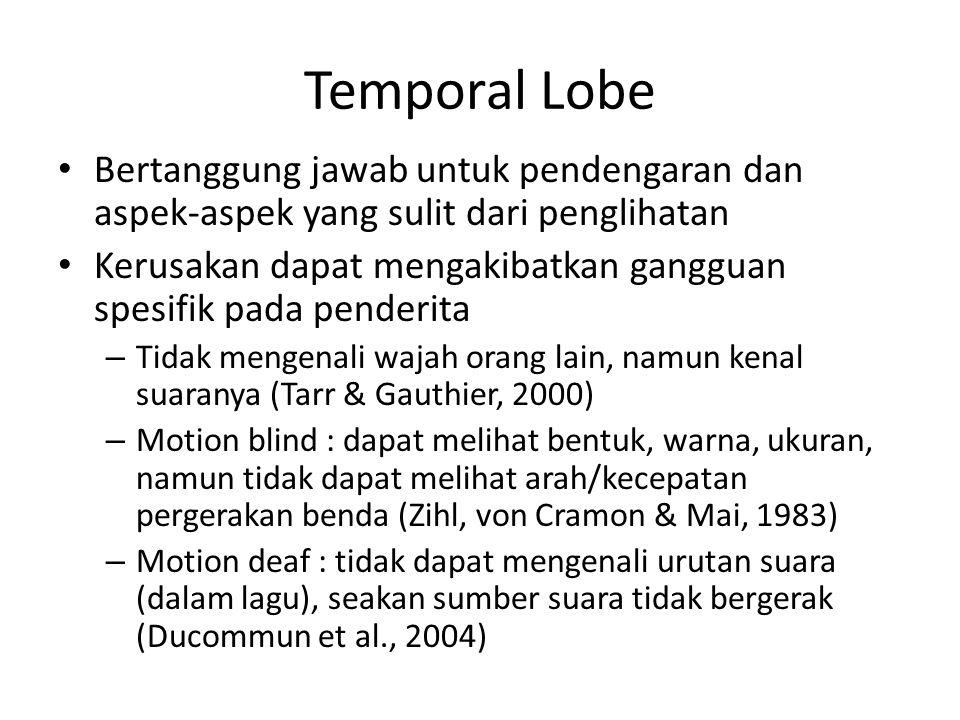 Temporal Lobe Bertanggung jawab untuk pendengaran dan aspek-aspek yang sulit dari penglihatan.