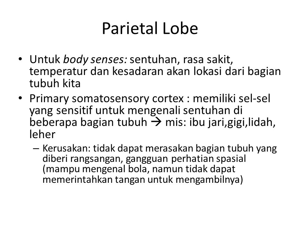 Parietal Lobe Untuk body senses: sentuhan, rasa sakit, temperatur dan kesadaran akan lokasi dari bagian tubuh kita.