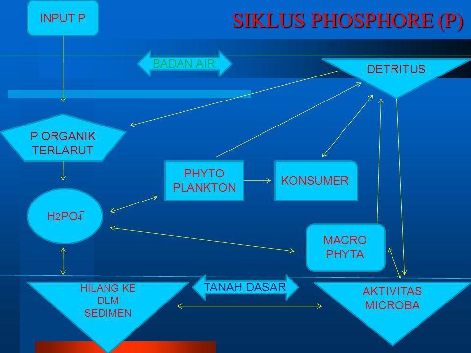 SIKLUS PHOSPHORE (P) INPUT P BADAN AIR DETRITUS P ORGANIK TERLARUT