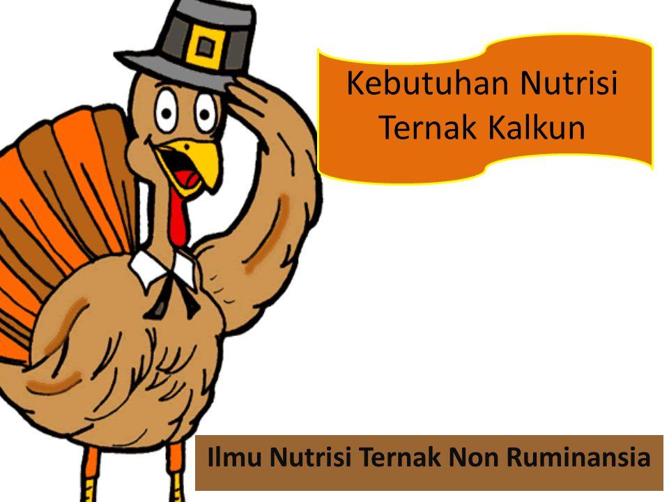Kebutuhan Nutrisi Ternak Kalkun