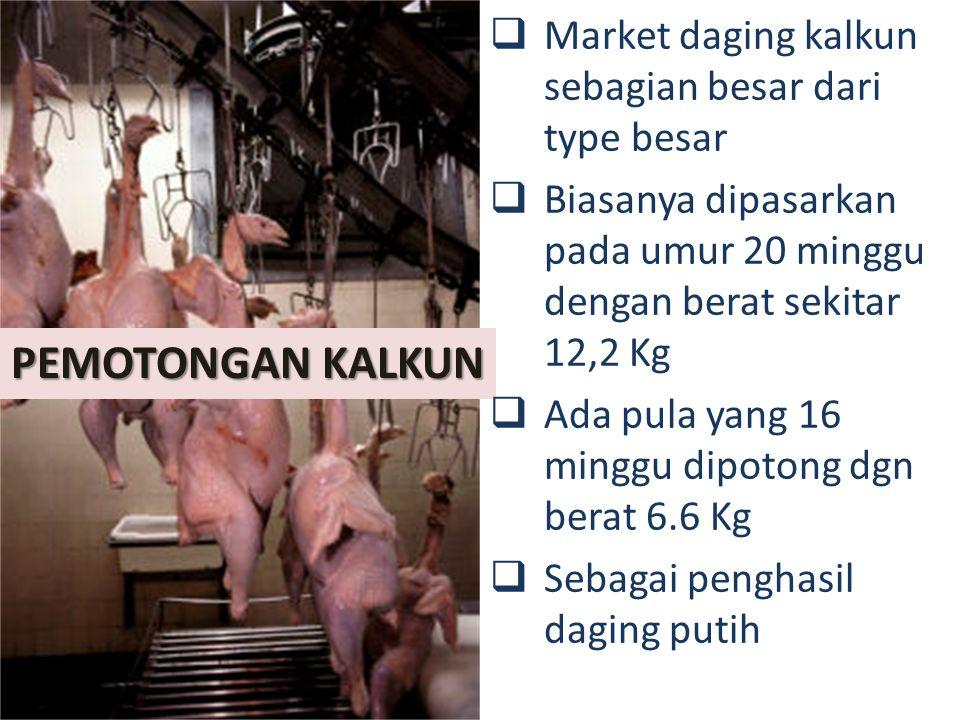 PEMOTONGAN KALKUN Market daging kalkun sebagian besar dari type besar