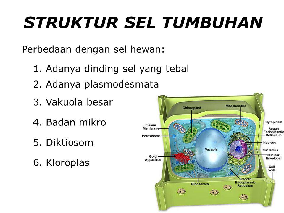 STRUKTUR SEL TUMBUHAN Perbedaan dengan sel hewan: