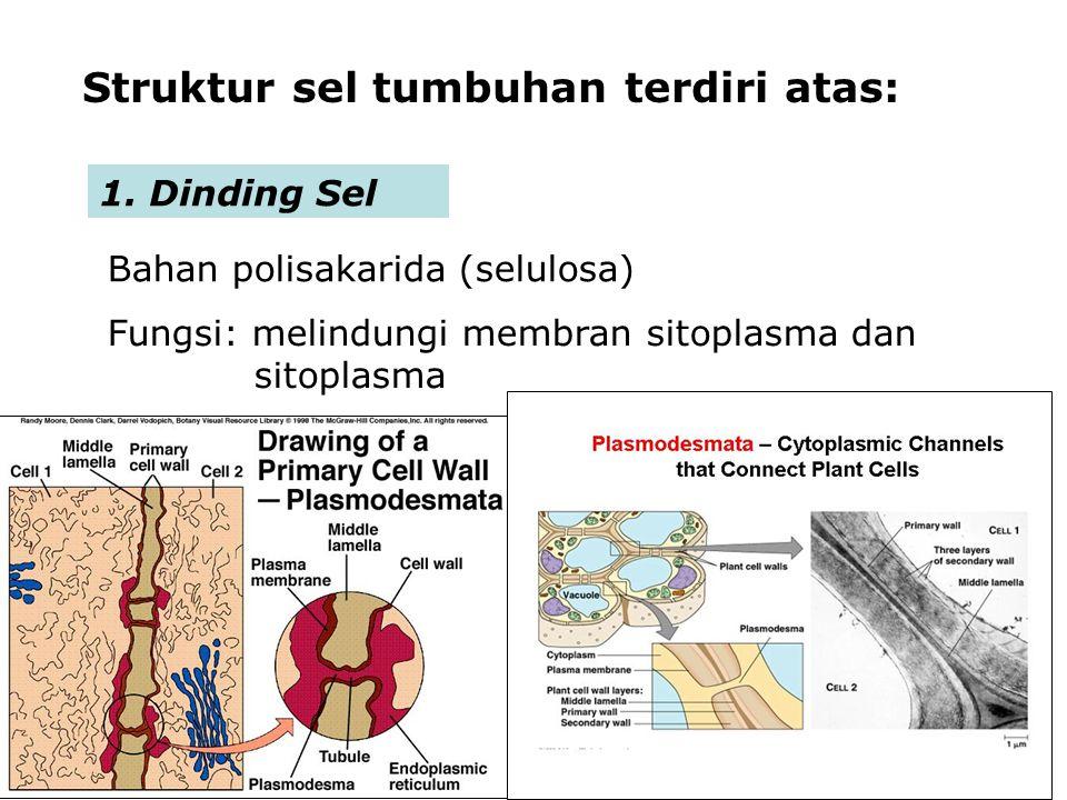 Struktur sel tumbuhan terdiri atas: