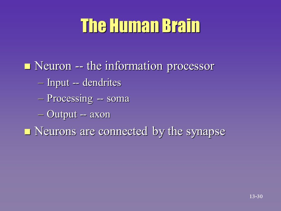 The Human Brain Neuron -- the information processor