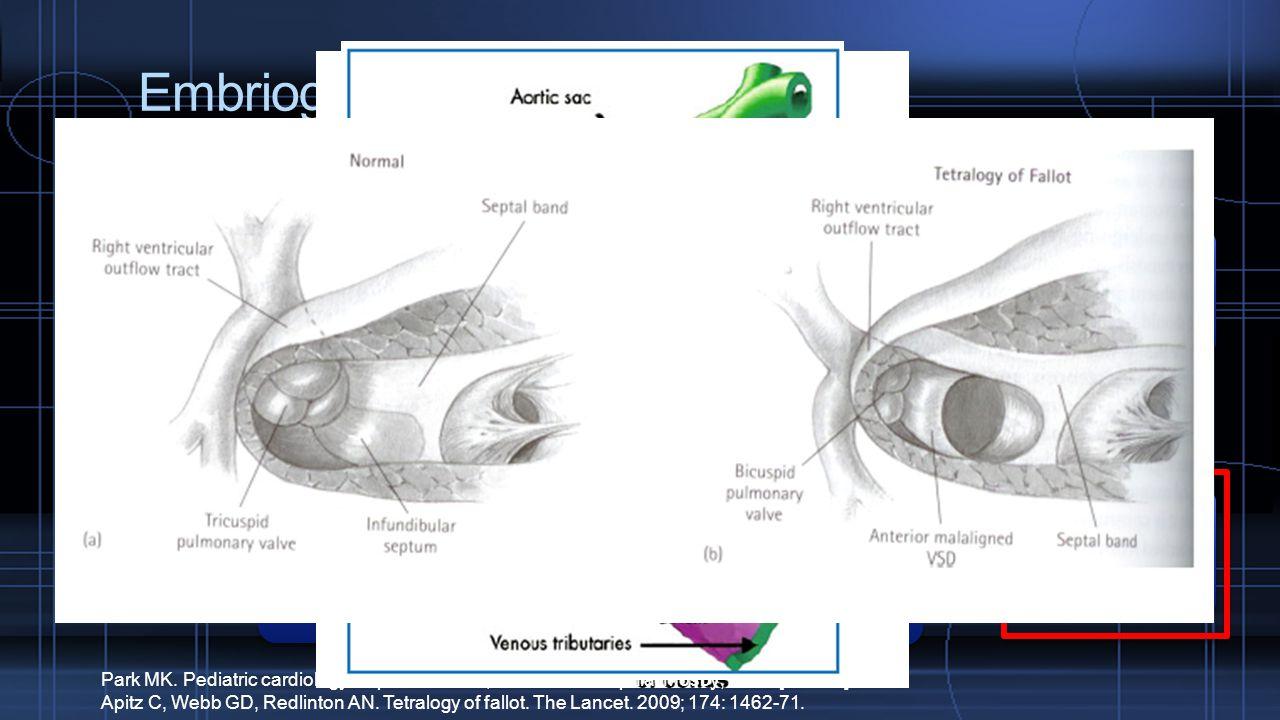 Embriogenesis Tuba bakal jantung