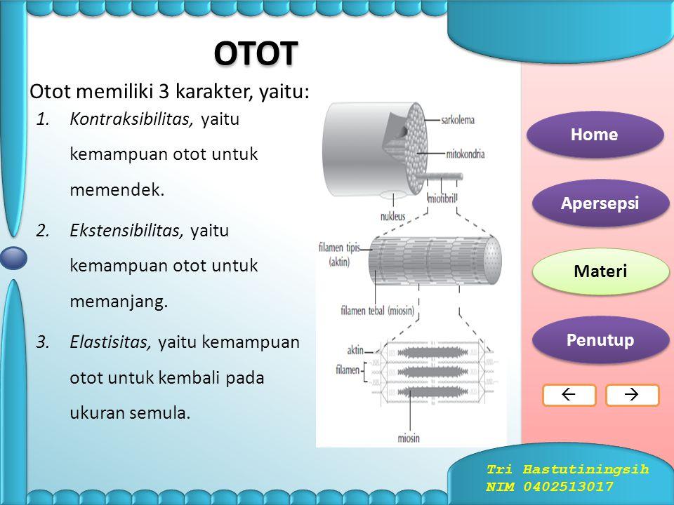 OTOT Otot memiliki 3 karakter, yaitu: