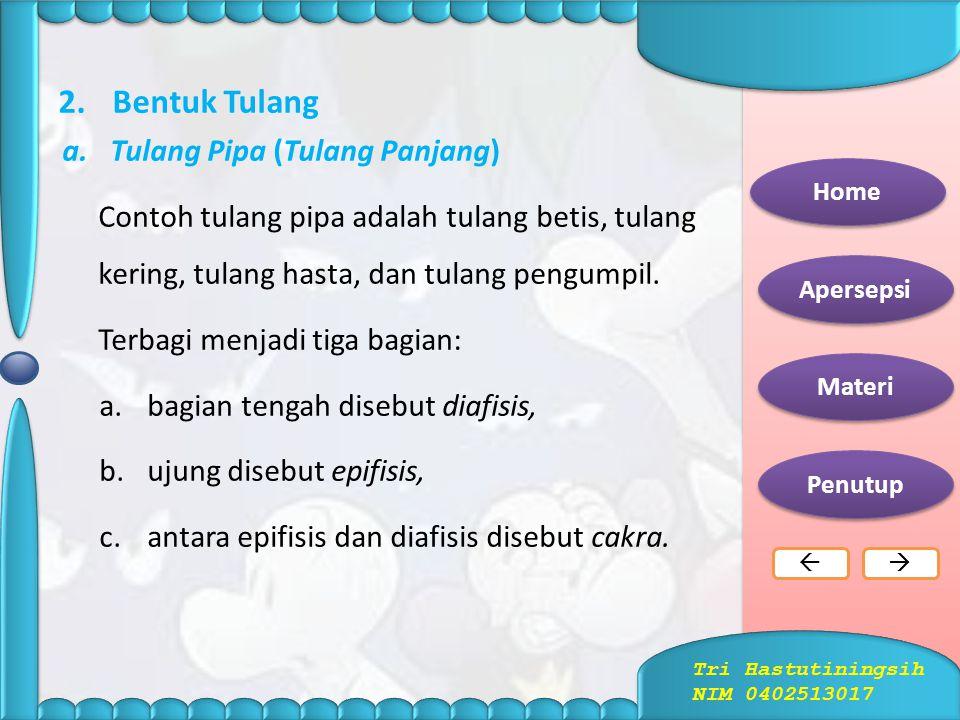 Bentuk Tulang Tulang Pipa (Tulang Panjang)