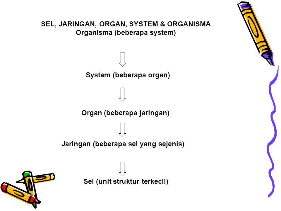 SEL, JARINGAN, ORGAN, SYSTEM & ORGANISMA Organisma (beberapa system)