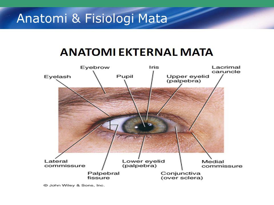 Anatomi & Fisiologi Mata