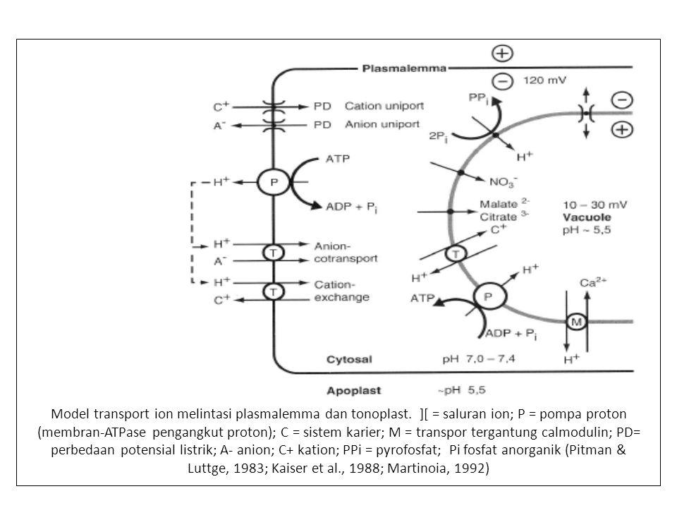 Model transport ion melintasi plasmalemma dan tonoplast
